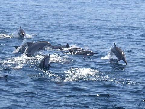 【旅遊路線】遇見海中精靈 太平洋賞鯨航海之旅